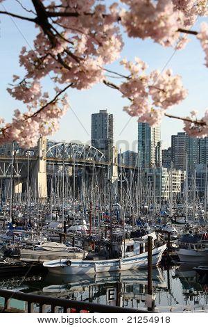 Vancouver Spring Scene