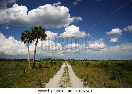 Hiking Trail through the Kissimmee Prairie