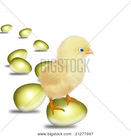 new-born chick
