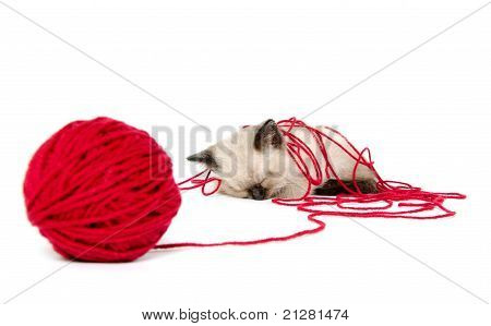 Cute Kitten And Red Yarn