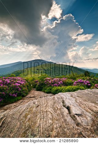 Blue Ridge Mountains Blooming Alpine Meadow Landscape At Roan Highlands