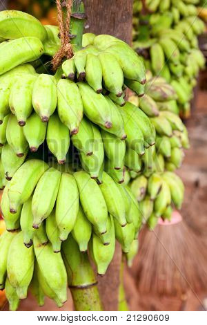 Bunch of green bananas for sale in Sri Lanka