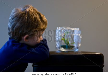 Pet Frog Watch