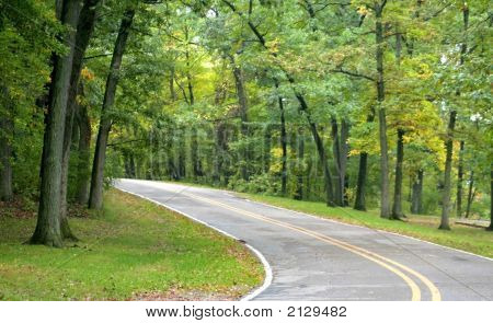 Drive Through Woods