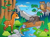 picture of brook trout  - Forest scene with various animals 1  - JPG