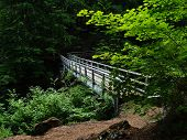 foto of mckenzie  - Tucked away in a lone forest by Clear Lake Oregon you might stumble across the footbridge - JPG