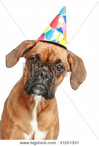 Boxer Puppy In Party Cone On White Background