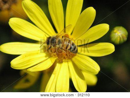 Biene in eine Blume