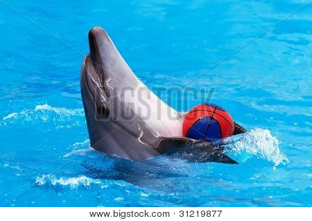 Dolphin playing with ball in blue water