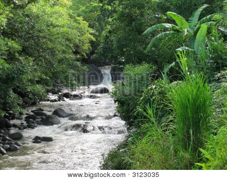 Stream In Costa Rica
