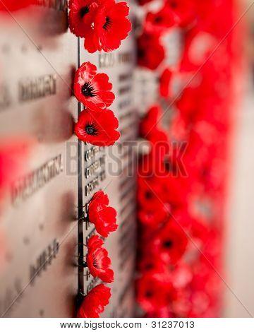 War Memorial Red Poppy Flower