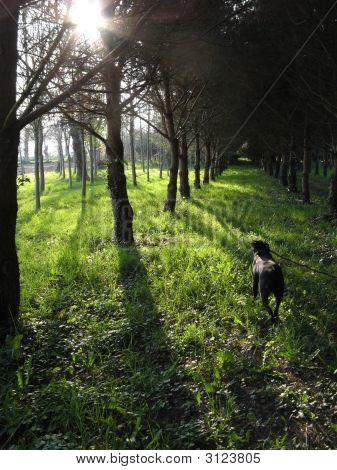 Correr pela floresta