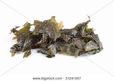 Seaweed Sugar Kelp