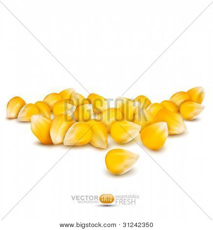 scattered grains of corn on a white background