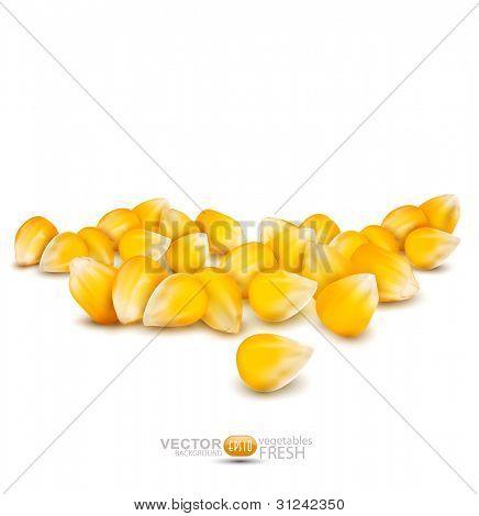 dispersados granos de maíz en un fondo blanco