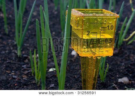 Rain Gauge in Garden