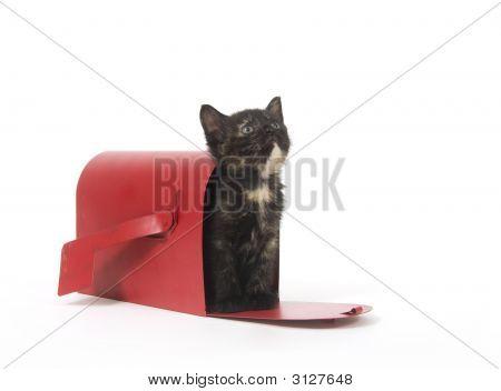 Gatito de pedido por correo
