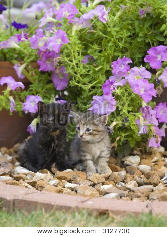 Two Kittens In A Flower Garden