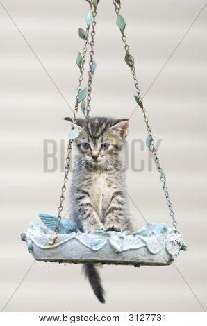 Tabby Kitten In A Birdfeeder