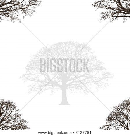 Abstract Oak Design
