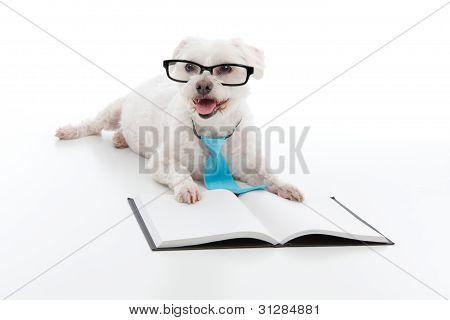 Dog Puppy Education Training