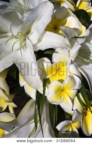 Frangipani and lilies