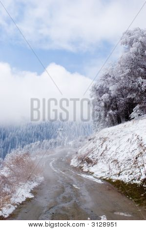 Trees And Road In Blue Fog At Mountain Tien Shan
