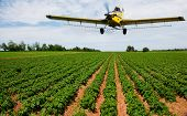 picture of wind wheel  - A yellow crop duster spraying a potato field - JPG