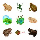 Bitmap Illustration Of Frog And Anuran Symbol. Collection Of Frog And Animal Bitmap Icon For Stock. poster
