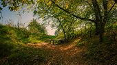 Fallen Leaves And An Old Wooden Bench In The Park. Autumn Landscape In The Countryside. poster