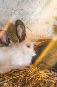 White Bunny With Black Spots poster