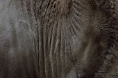 Blurred Animals Texture. Wildlife, Animals, Textures Concept. Cropped Shot Of Brown Camel Fur. Brown poster