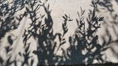 Monochrome Shadows From Willow Tree Foliage On Rough Concrete Wall Background. Shadow Ornaments Crea poster