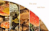 Collage From From Poisonous And Edible Mushrooms, A Toadstools. Mushroom Collage. Autumn Collage Sho poster
