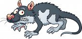 foto of opossum  - Scared cartoon opossum - JPG