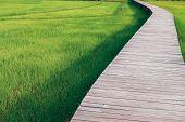 Wooden Bridge Footbridge Walkway Pathway Along Rice Paddy Field poster