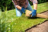 Man laying grass turf rolls for new garden lawn poster
