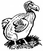 picture of dodo  - Dodo standing on the grass on white background - JPG