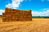 stock photo of briquette  - Briquettes of Dry Hay in a Field in Southern France - JPG