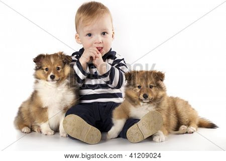 child and puppies Sheltie