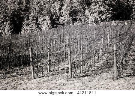 Vineyards, Willamette Valley In Infrared