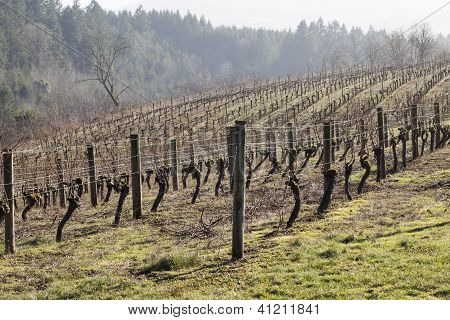 Vineyards, Northern Willamette Valley