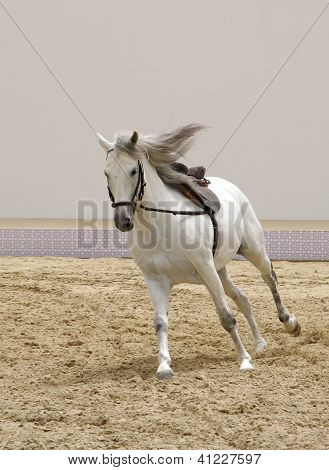 A beautiful white stallion galloping