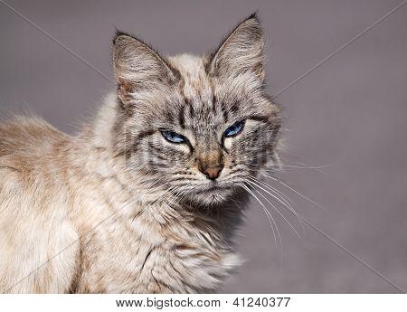 Morose tabby Cat