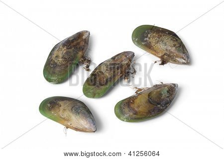 Fresh Green lipped mussels from New Zealand