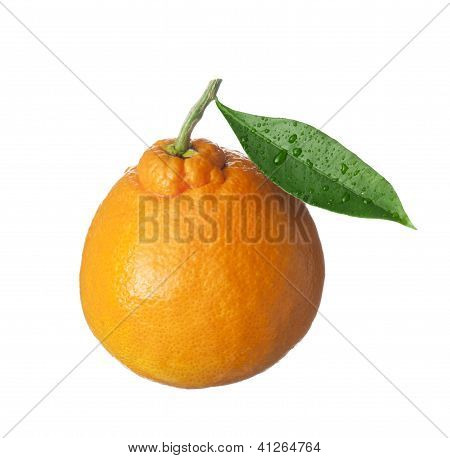 Isolated Fruit On White,an Orange