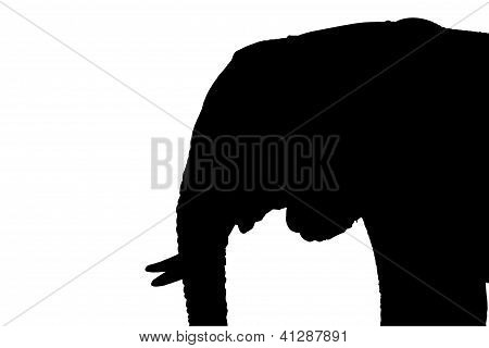 Isolated Elephant Profile