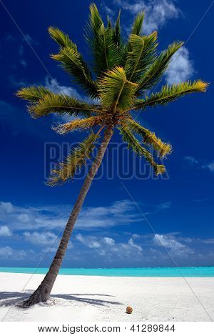 Pristine Tropical Beach