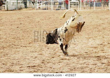 Bucking Bull 1