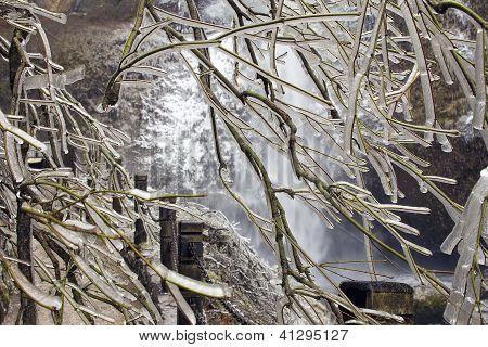 Frozen Tree Along Hiking Path In Winter